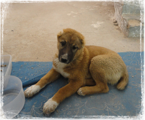 Bodhi-the-Dog